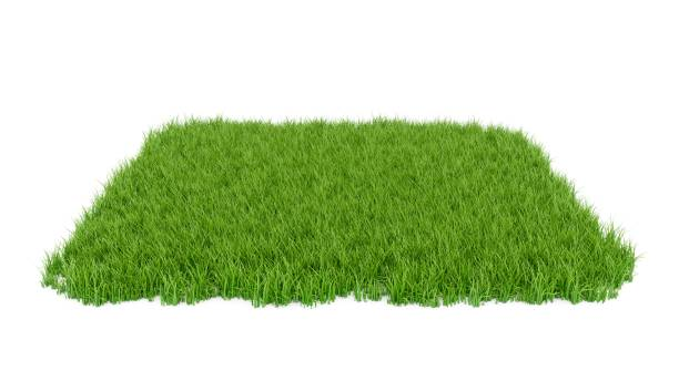 3d rendering green grass field isolated on white background - grass stock illustrations