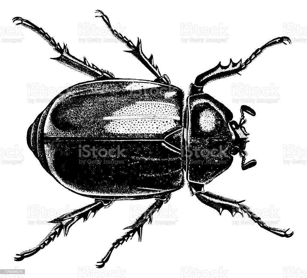 Rendition of a black beetle bug vector art illustration