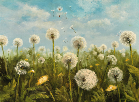 Reproduction of dandelions
