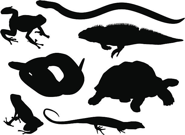 reptiles and amphibians - amphibians stock illustrations