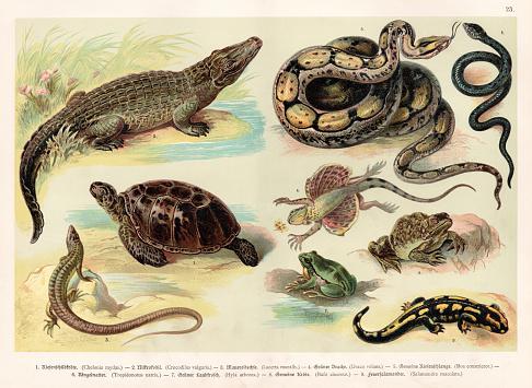 Reptiles lithograph 1888