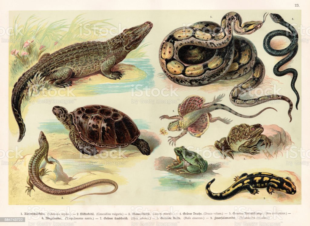 Reptiles lithograph 1888 vector art illustration