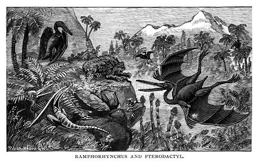 Rhamphorhynchus and Pterodactyl