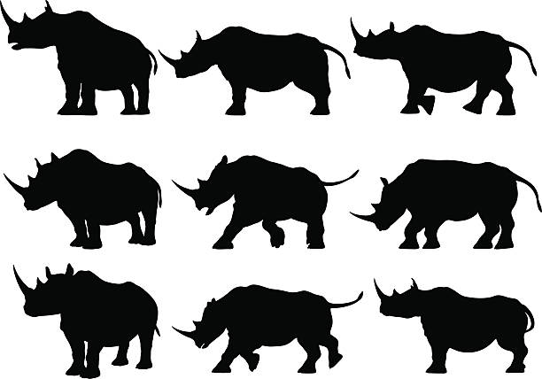 Rhinoceros Silhouettes Set of design elements - Rhinoceros Silhouettes. rhinoceros stock illustrations