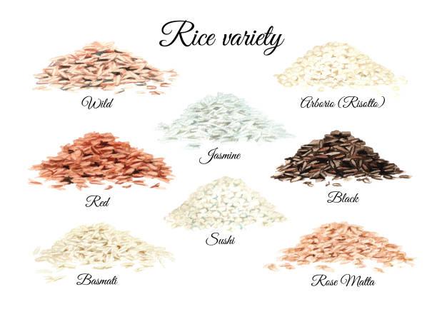 illustrations, cliparts, dessins animés et icônes de variété de riz. ensemble d'illustrations dessinées à la main aquarelle isolé sur fond blanc - risotto