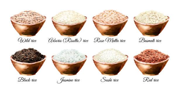 illustrations, cliparts, dessins animés et icônes de variété de riz. ensemble d'illustrations dessinées à la main aquarelle, isolé sur fond blanc - risotto