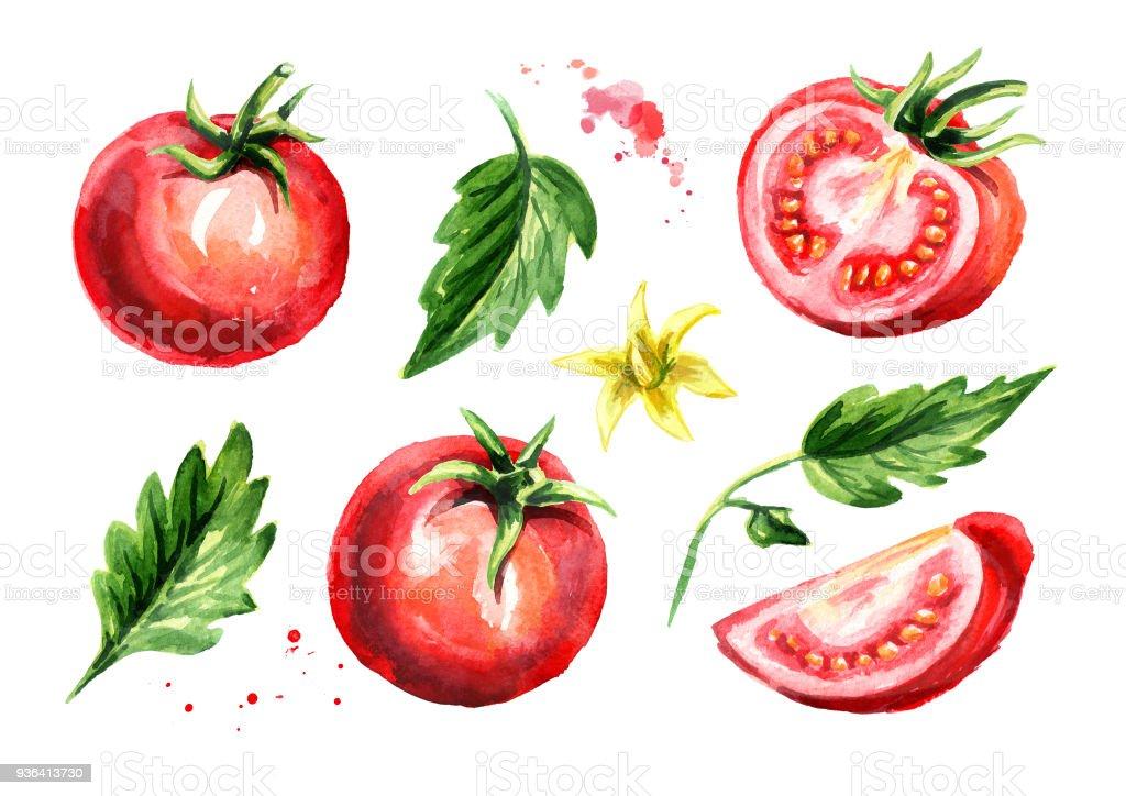 トマト セットをリッピングします水彩の手描きイラスト白い背景で隔離 みずみずしいのベクターアート素材や画像を多数ご用意 Istock