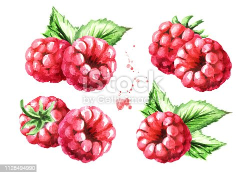 Ripe raspberries with green leaves set. Watercolor hand drawn illustration, isolated on white background