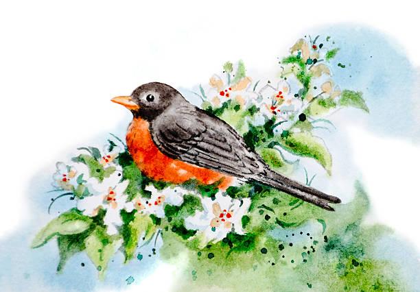 Robin Red Breast Welcomes Spring vector art illustration