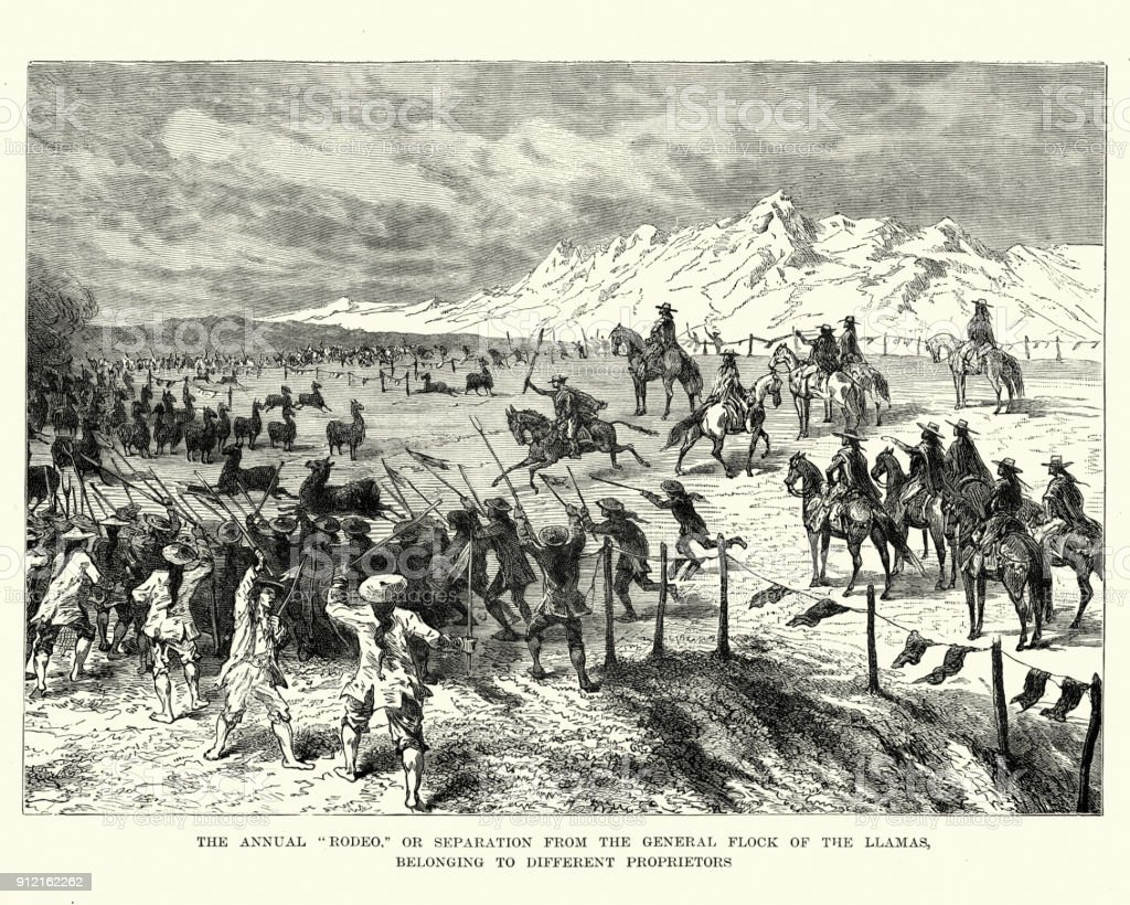 Rodeo de Llamas, Bolivia, siglo XIX - ilustración de arte vectorial