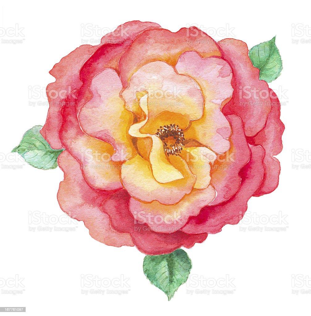 Romantic Rose in watercolor royalty-free stock vector art