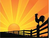 Rooster Sunrise