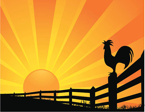 "Rooster Sunrise ""A vector illustration of a rooster crowing at sunrise. Objects are grouped and layered for easy editing. Files included: AI12, EPS8 and Large High Res JPG."" rooster stock illustrations"