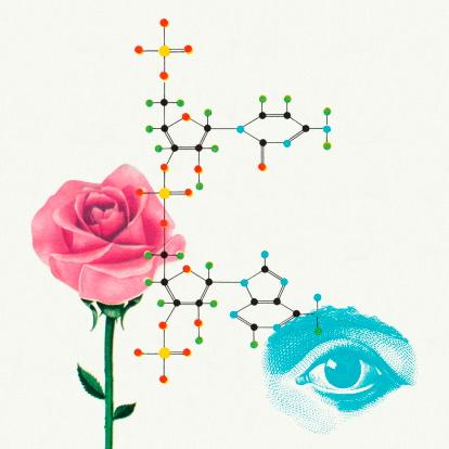 Rose and Eye