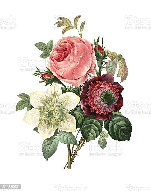 High resolution illustration of a bouquet of rose, anemone and clematis, isolated on white background. Engraving by Pierre-Joseph Redoute. Published in Choix Des Plus Belles Fleurs, Paris (1827).