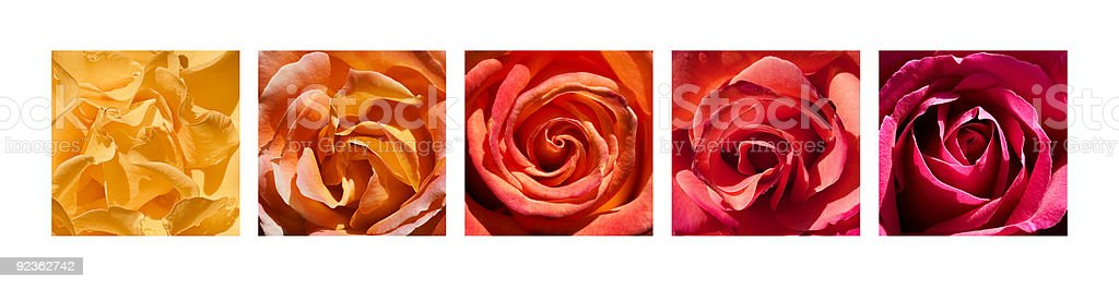 Rose Hearts Rainbow royalty-free rose hearts rainbow stock vector art & more images of abstract
