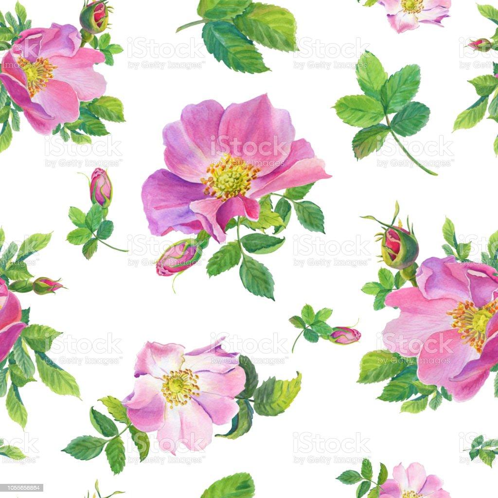 Rose Musquee Fleurs De Bruyere Sauvage Aquarelle Sur Fond Blanc