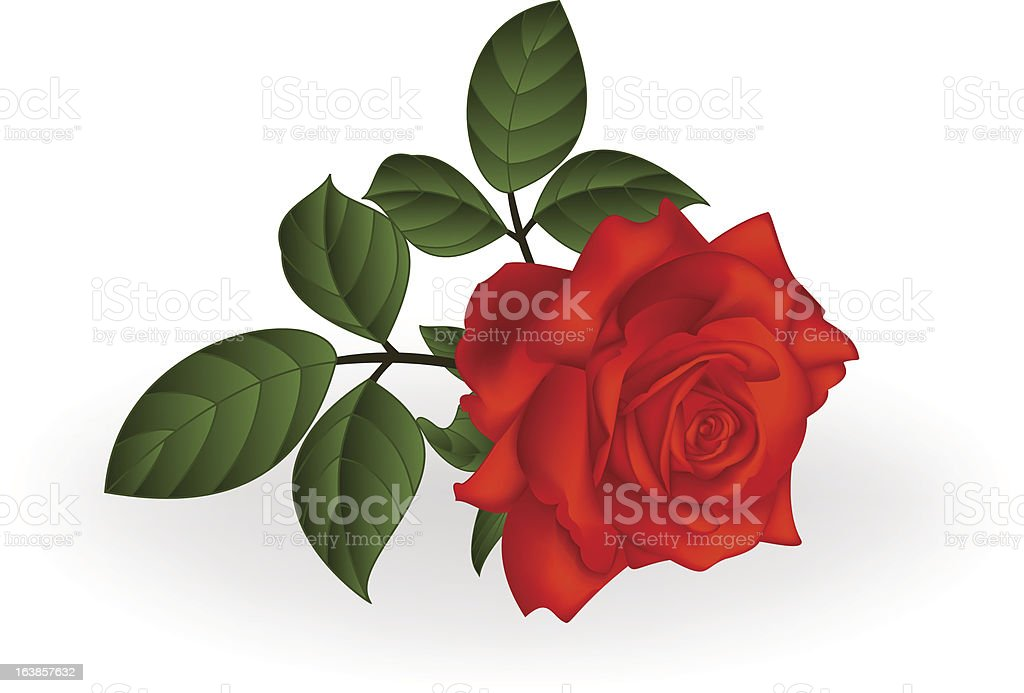 Rose royalty-free rose stock vector art & more images of bud