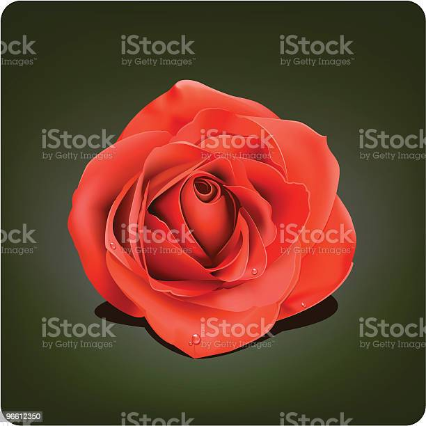 Rose-vektorgrafik och fler bilder på Alla hjärtans dag