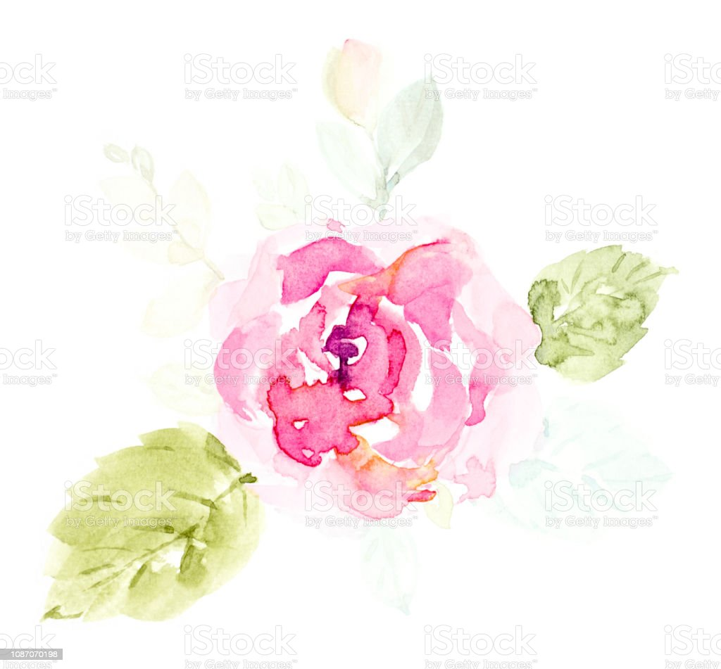 Hand painted watercolor bouquet flowers on a white background. Rose...