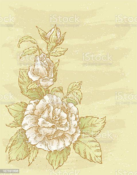 Rose with buds illustration id167591898?b=1&k=6&m=167591898&s=612x612&h=ueckyog8prg dv7k6whhj  jrgxiozhm i0dqi9wj0m=