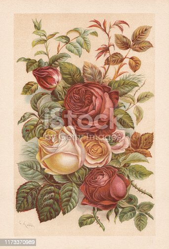 Roses. Chromolithograph, published in 1894.