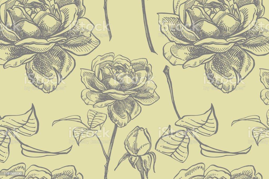 Roses. Hand drawn flower set illustrations. Botanical plant...