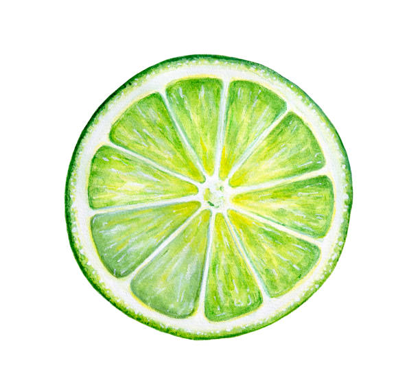 Round slice of green fresh lime. Culinary fruit, natural source of vitamin C, component of many classic cocktails and traditional pies. Hand painted watercolor drawing on white background, isolated. lime stock illustrations