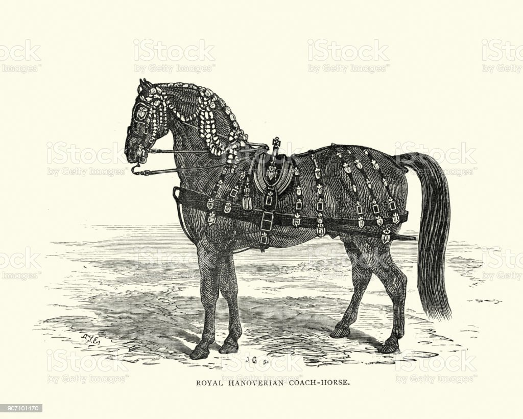 hanoverian horse diagram simple wiring diagram schemahanoverian horse diagram wiring diagram todays percheron horses hanoverian horse diagram