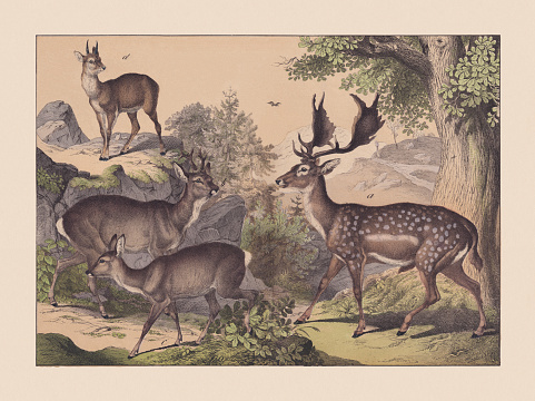 Ruminants, hand-colored chromolithograph, published in 1869