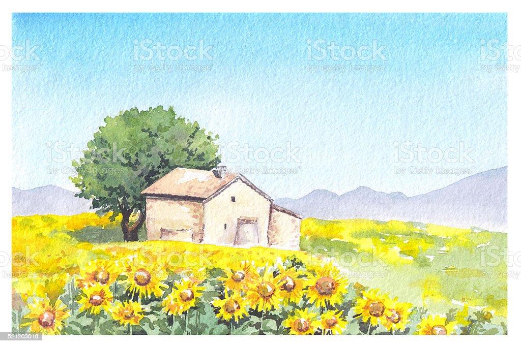 Fattoria di campagna provenzale casa e girasole in campo for Immagini di case in stile fattoria