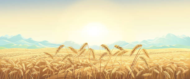 Rural landscape with wheat field vector art illustration