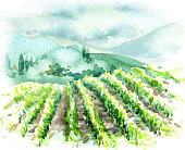 Hand drawn rural scene with vineyard, hills, trees and bushes. Summer landscape watercolor sketch.