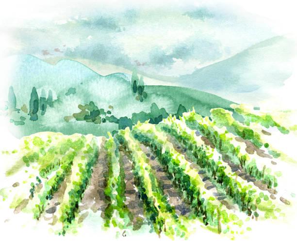 bildbanksillustrationer, clip art samt tecknat material och ikoner med lantlig scen med vingård, kullar och träd - vineyard