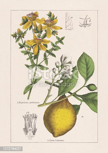 istock Rutaceae, Hypericaceae, chromolithograph, published in 1895 1272794221