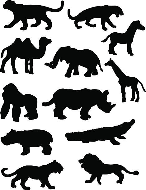 stockillustraties, clipart, cartoons en iconen met safari animal silhouettes - kat