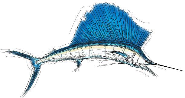 Sailfish Atlantic Sailfish sketch. RETROROCKET stock illustrations