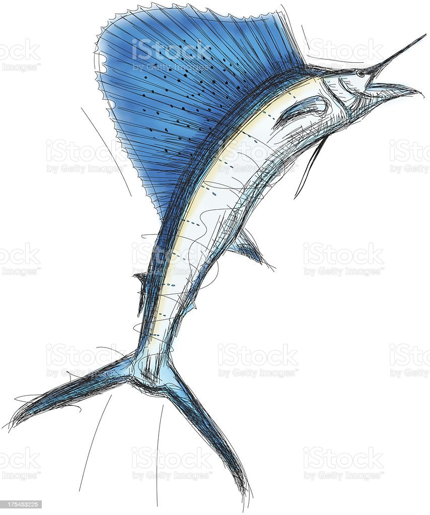 Sailfish vector art illustration