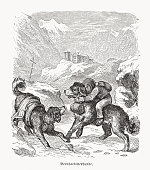 istock Saint Bernard dogs, wood engraving, published in 1889 1340867205