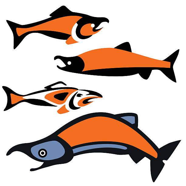 salmon.eps vector art illustration