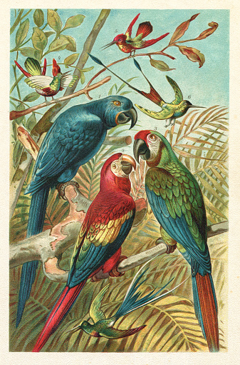 Scarlet Hyacinth macaw colibri in the rainforest illustration