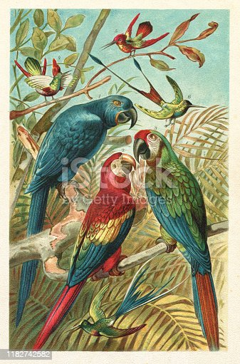 1. The hyacinth macaw ( Anodorhynchus hyacinthinus ), or hyacinthine macaw, is a parrot native to central and eastern South America. 2. Scarlet macaw ( Ara macao ) Kolibri Original edition from my own archives Source :