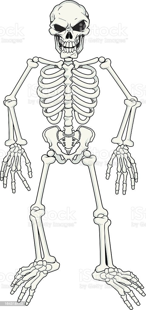Scary Cartoon  fully poseable skeleton royalty-free scary cartoon fully poseable skeleton stock vector art & more images of arm bone
