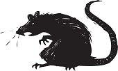 istock scary rat 165900490