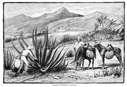Scene in Central America