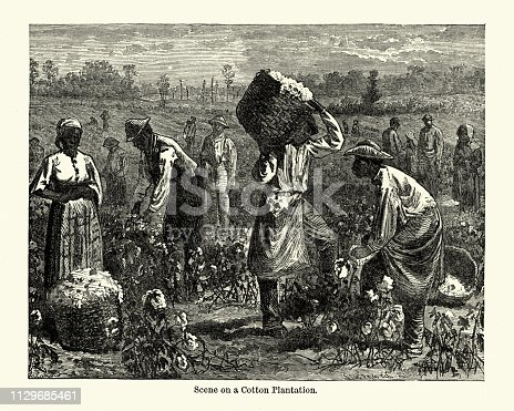 Vintage engraving of Scene on a cotton plantation, Southern USA, 19th Century