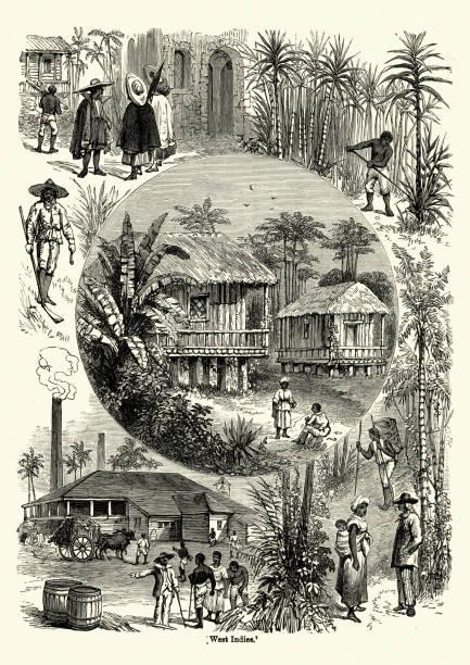 illustrazioni stock, clip art, cartoni animati e icone di tendenza di scenes from the west indies in the 19th century - zuccherificio