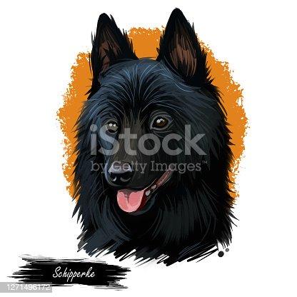 Schipperke dog portrait isolated on white. Digital art illustration of hand drawn web, t-shirt print and puppy food cover design. Spitzke, Spits or Spitske Belgian breed of spitz miniature sheepdog