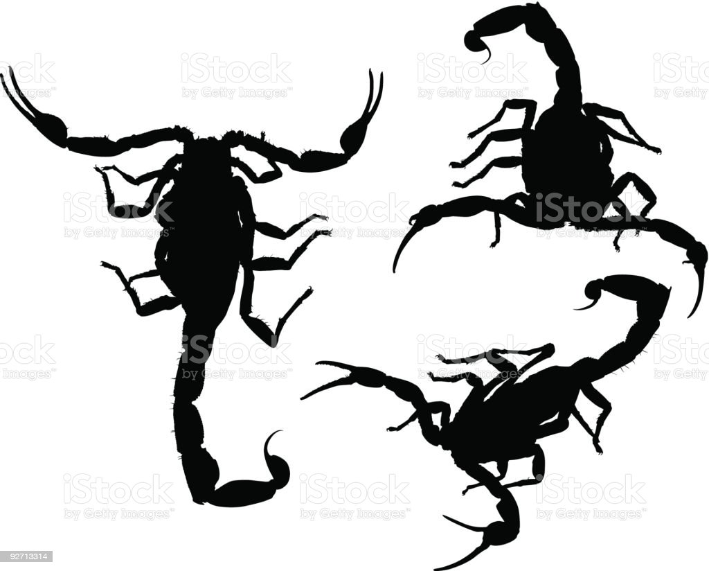 Scorpion Silhouettes (Vector) royalty-free stock vector art