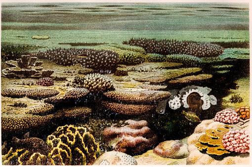 Sea Anemone marine animal